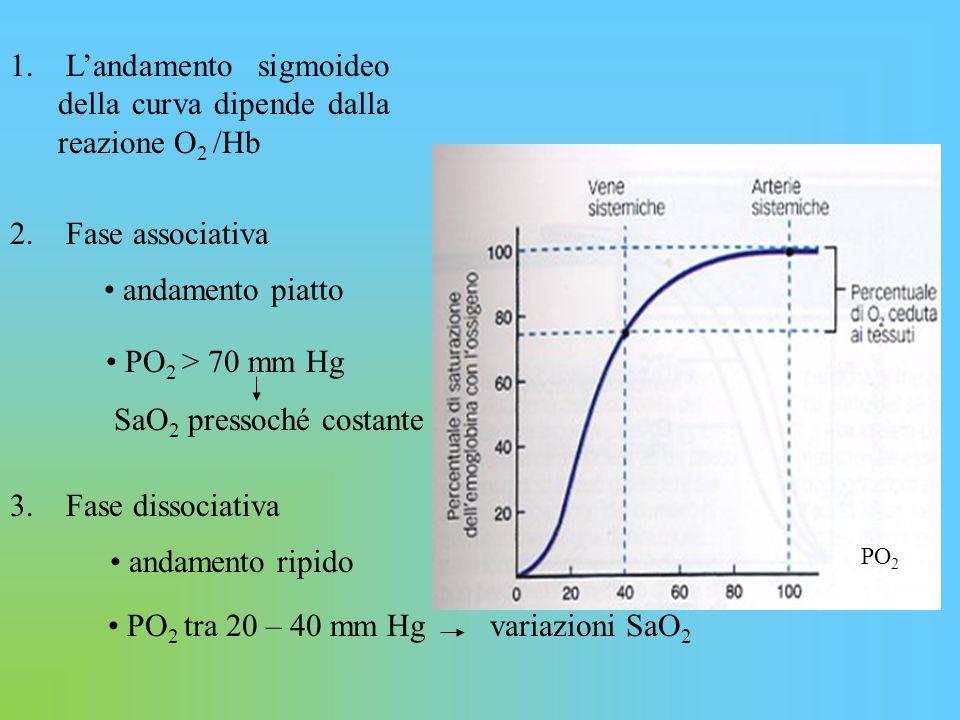 PO 2 1. L'andamento sigmoideo della curva dipende dalla reazione O 2 /Hb 2. Fase associativa andamento piatto PO 2 > 70 mm Hg SaO 2 pressoché costante