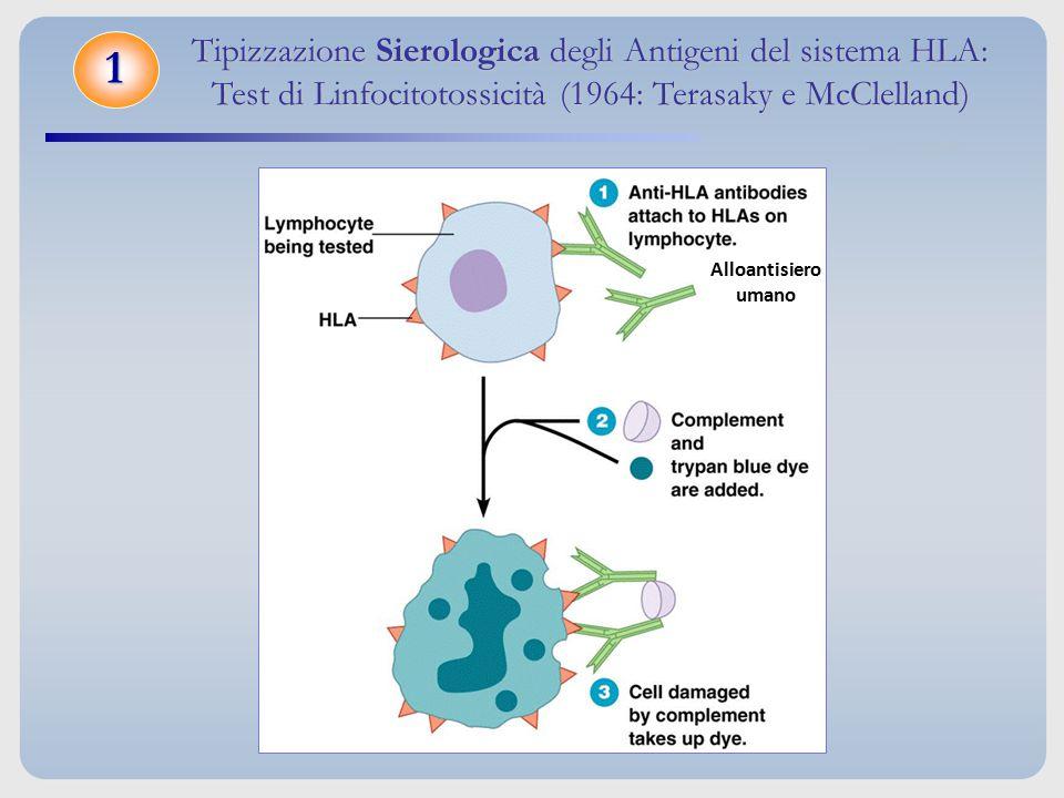 Tipizzazione Sierologica degli Antigeni del sistema HLA: Test di Linfocitotossicità (1964: Terasaky e McClelland) 1 Alloantisiero umano