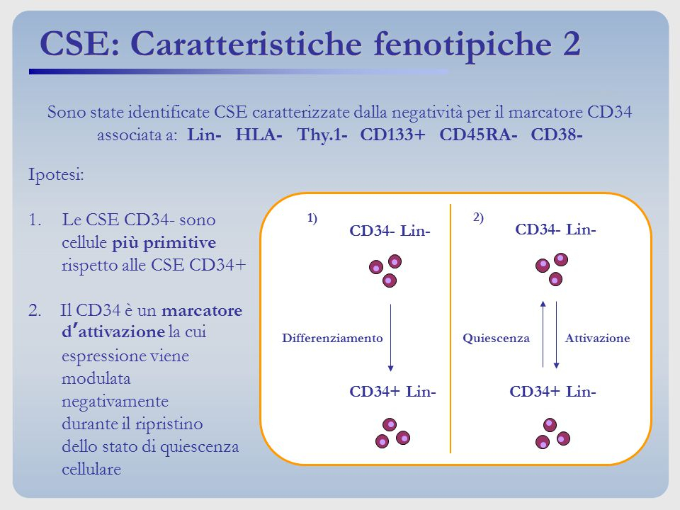 Ipotesi: 1.Le CSE CD34- sono cellule più primitive rispetto alle CSE CD34+ 2. Il CD34 è un marcatore d'attivazione la cui espressione viene modulata n