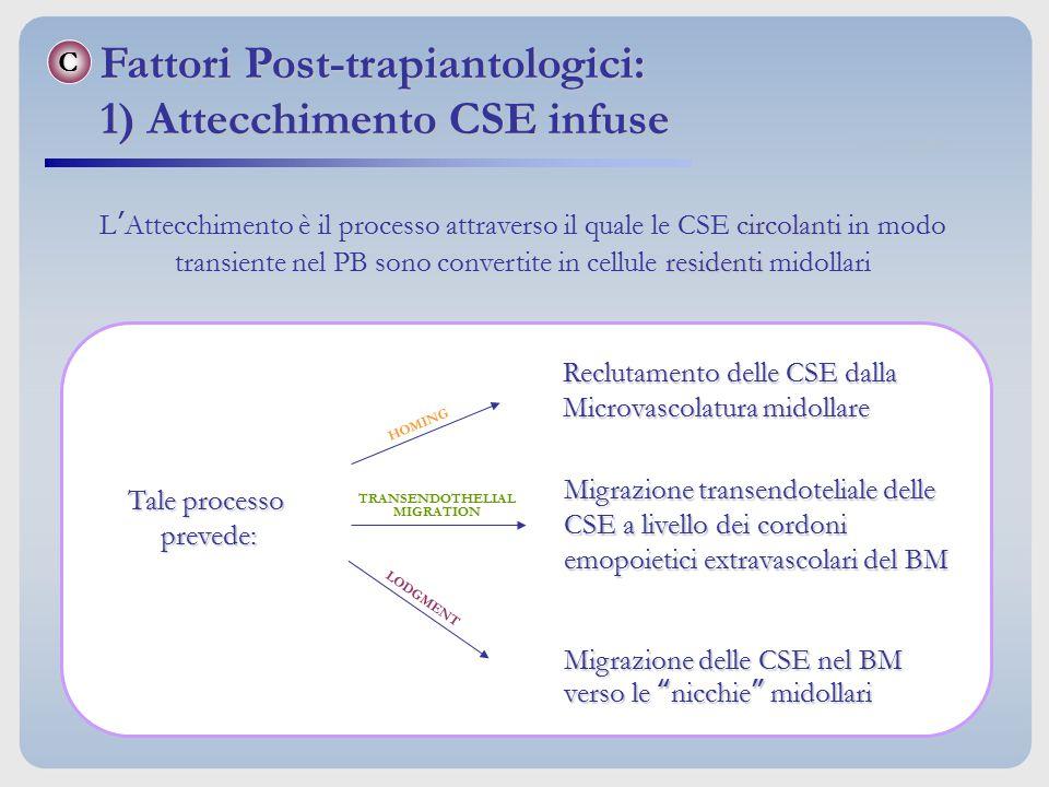 C circolanti residenti L'Attecchimento è il processo attraverso il quale le CSE circolanti in modo transiente nel PB sono convertite in cellule reside