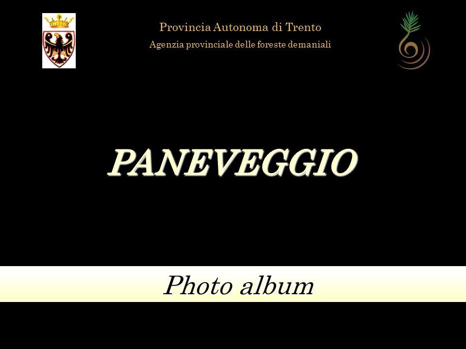 PANEVEGGIO Photo album Provincia Autonoma di Trento Agenzia provinciale delle foreste demaniali