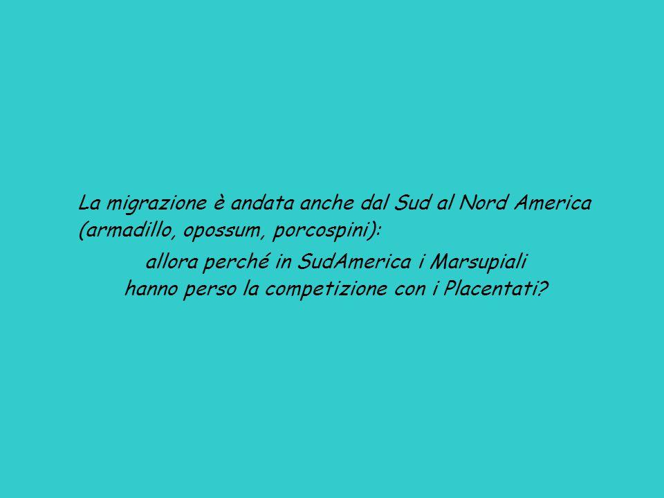 La migrazione è andata anche dal Sud al Nord America (armadillo, opossum, porcospini): allora perché in SudAmerica i Marsupiali hanno perso la competizione con i Placentati?
