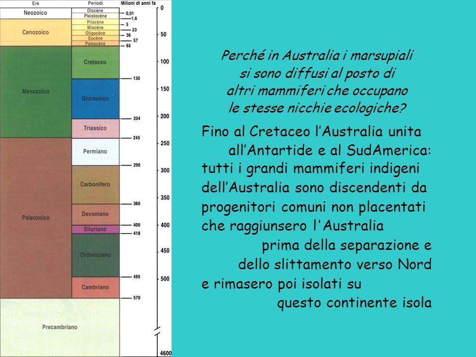 Perché in Australia i marsupiali si sono diffusi al posto di altri mammiferi che occupano le stesse nicchie ecologiche.