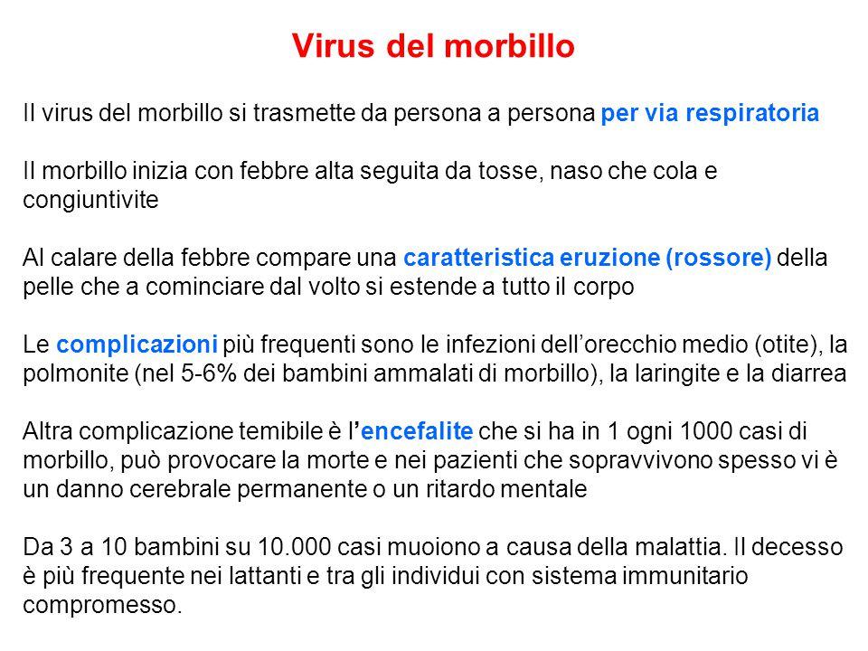 Il virus del morbillo si trasmette da persona a persona per via respiratoria Il morbillo inizia con febbre alta seguita da tosse, naso che cola e cong