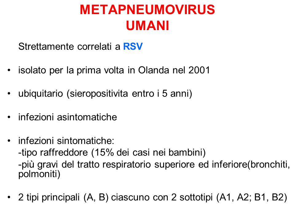 METAPNEUMOVIRUS UMANI Strettamente correlati a RSV isolato per la prima volta in Olanda nel 2001 ubiquitario (sieropositivita entro i 5 anni) infezion