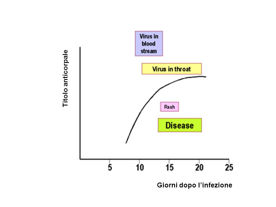 Titolo anticorpale Giorni dopo l'infezione