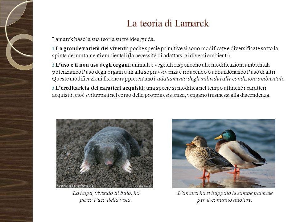 La teoria di Lamarck Lamarck basò la sua teoria su tre idee guida. 1. La grande varietà dei viventi: poche specie primitive si sono modificate e diver