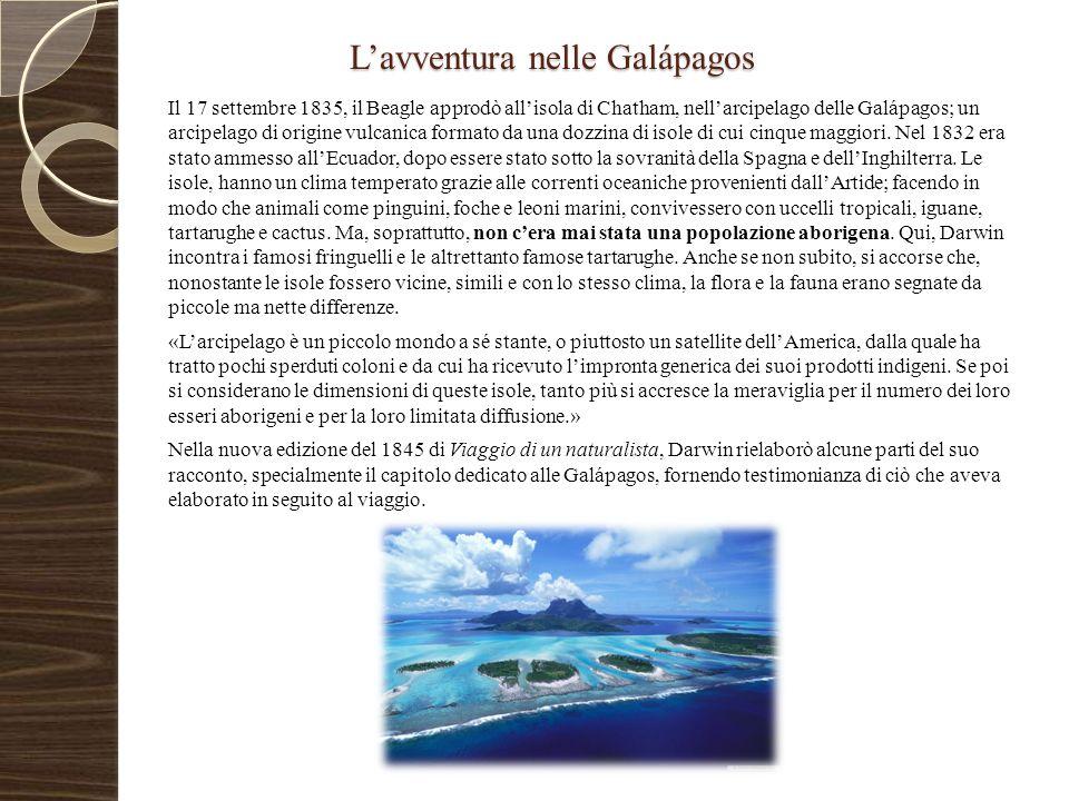 L'avventura nelle Galápagos Il 17 settembre 1835, il Beagle approdò all'isola di Chatham, nell'arcipelago delle Galápagos; un arcipelago di origine vu