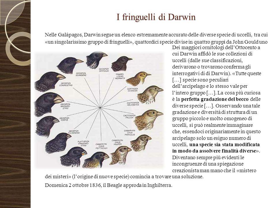 Le riflessioni di Darwin Ritornato in patria Darwin iniziò a studiare il materiale raccolto.