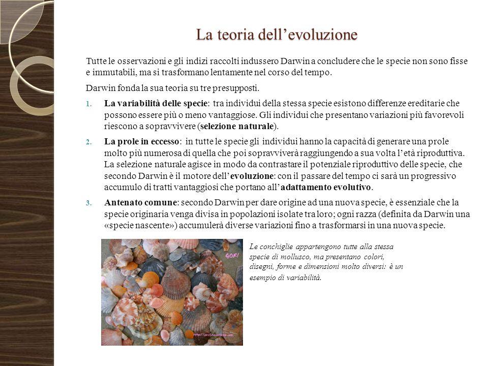 La teoria dell'evoluzione Tutte le osservazioni e gli indizi raccolti indussero Darwin a concludere che le specie non sono fisse e immutabili, ma si t