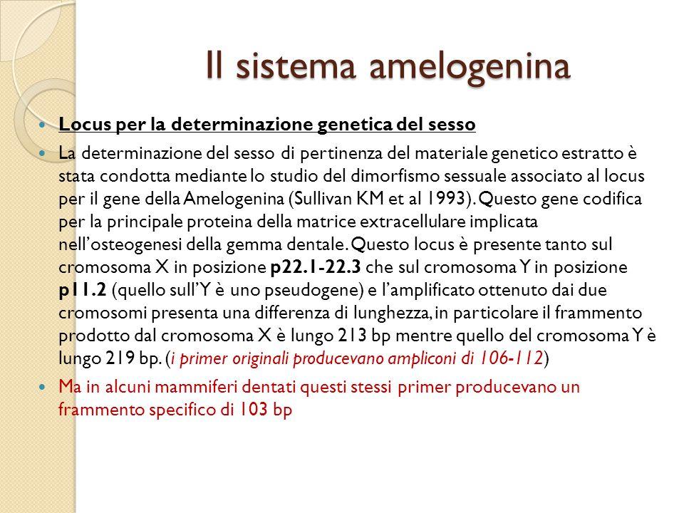 Il sistema amelogenina Locus per la determinazione genetica del sesso La determinazione del sesso di pertinenza del materiale genetico estratto è stat