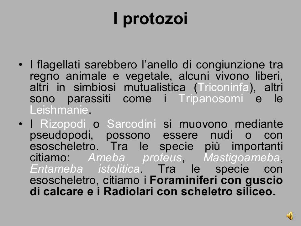 I protozoi I flagellati sarebbero l'anello di congiunzione tra regno animale e vegetale, alcuni vivono liberi, altri in simbiosi mutualistica (Triconinfa), altri sono parassiti come i Tripanosomi e le Leishmanie.