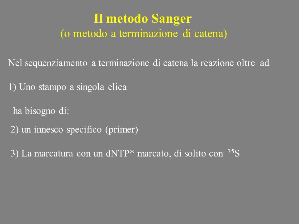 Denaturazione del vettore Utilizzo di un fago helper Per M13 e produzione della Forma a singolo filamento (1) Produzione dello stampo a filamento sing