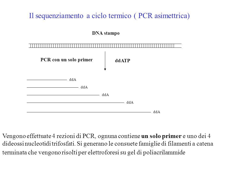 Nuovi metodi di sequenziamento Il sequenziamento a ciclo termico ( PCR asimmetrica) Il sequenziamento automatizzato con marcatori fluorescenti