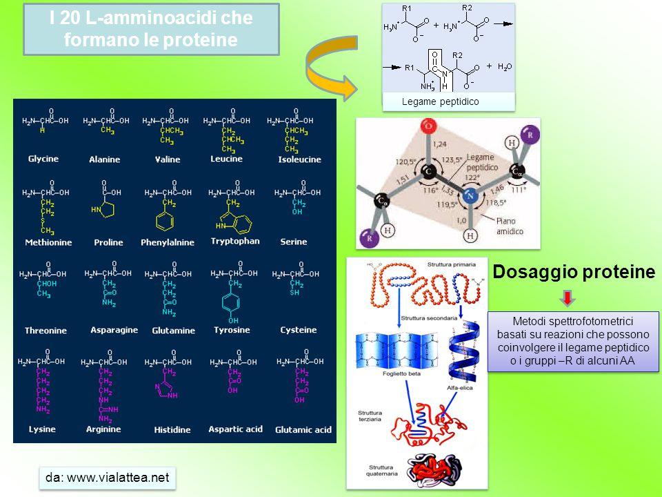 I 20 L-amminoacidi che formano le proteine Legame peptidico da: www.vialattea.net Metodi spettrofotometrici basati su reazioni che possono coinvolgere