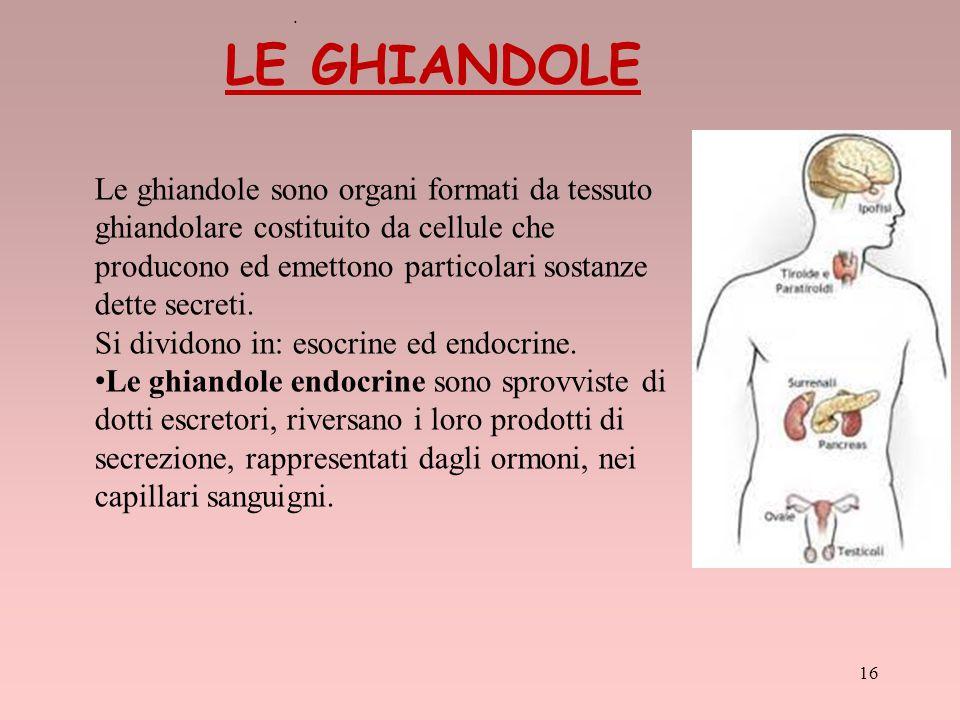 . Le ghiandole sono organi formati da tessuto ghiandolare costituito da cellule che producono ed emettono particolari sostanze dette secreti. Si divid