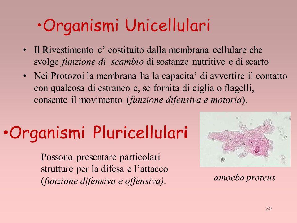 Organismi Unicellulari Il Rivestimento e' costituito dalla membrana cellulare che svolge funzione di scambio di sostanze nutritive e di scarto Nei Pro