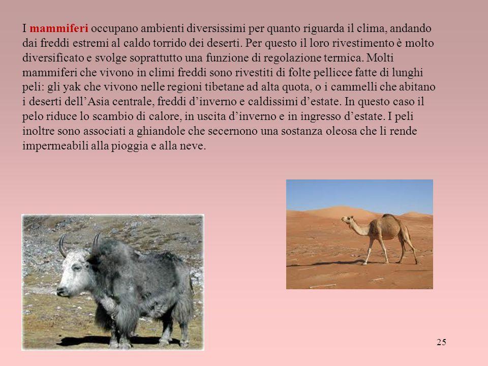 I mammiferi occupano ambienti diversissimi per quanto riguarda il clima, andando dai freddi estremi al caldo torrido dei deserti. Per questo il loro r