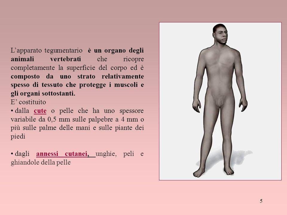 L'apparato tegumentario è un organo degli animali vertebrati che ricopre completamente la superficie del corpo ed è composto da uno strato relativamen