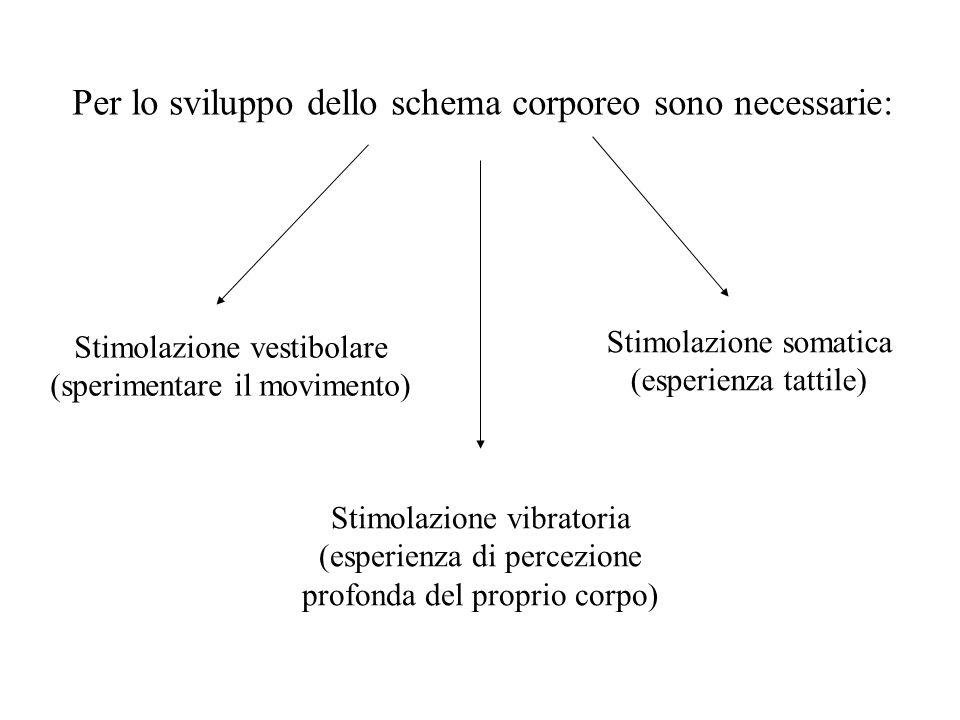 Per lo sviluppo dello schema corporeo sono necessarie: Stimolazione vestibolare (sperimentare il movimento) Stimolazione somatica (esperienza tattile) Stimolazione vibratoria (esperienza di percezione profonda del proprio corpo)