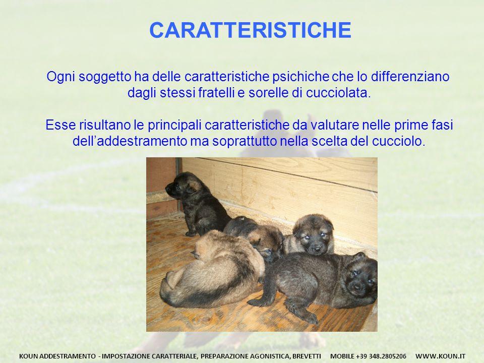 CARATTERISTICHE Ogni soggetto ha delle caratteristiche psichiche che lo differenziano dagli stessi fratelli e sorelle di cucciolata.
