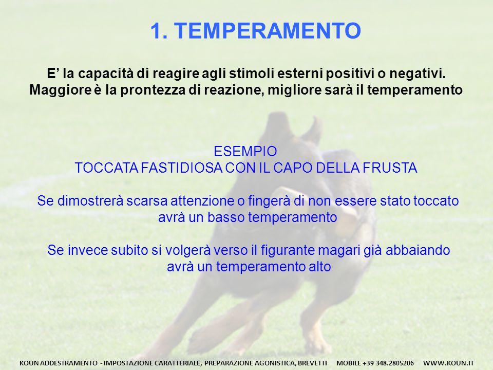 1. TEMPERAMENTO E' la capacità di reagire agli stimoli esterni positivi o negativi. Maggiore è la prontezza di reazione, migliore sarà il temperamento