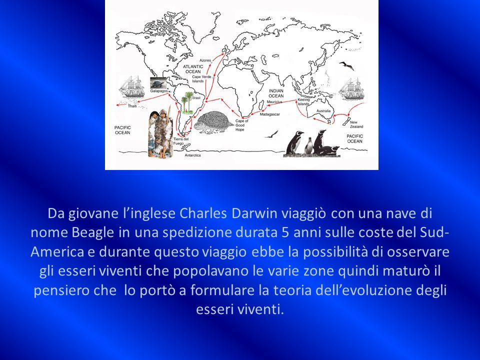 Da giovane l'inglese Charles Darwin viaggiò con una nave di nome Beagle in una spedizione durata 5 anni sulle coste del Sud- America e durante questo viaggio ebbe la possibilità di osservare gli esseri viventi che popolavano le varie zone quindi maturò il pensiero che lo portò a formulare la teoria dell'evoluzione degli esseri viventi.