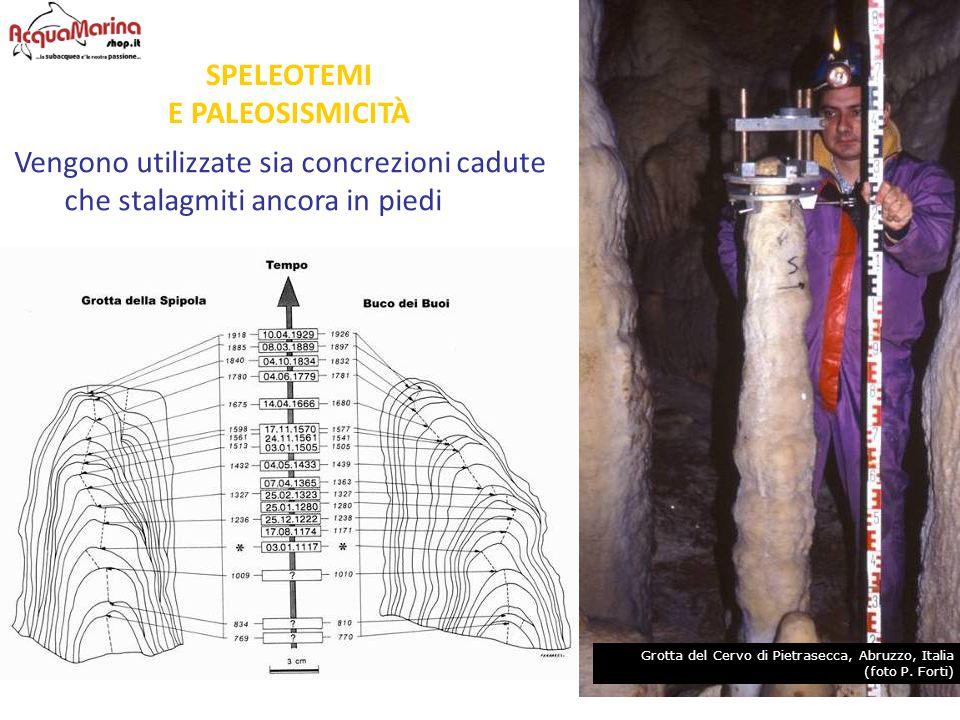 SPELEOTEMI E PALEOSISMICITÀ Vengono utilizzate sia concrezioni cadute che stalagmiti ancora in piedi Grotta del Cervo di Pietrasecca, Abruzzo, Italia
