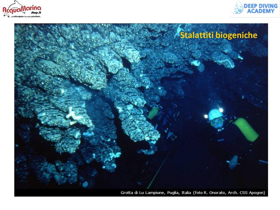 Stalattiti biogeniche Grotta di Lu Lampiune, Puglia, Italia (foto R. Onorato, Arch. CSS Apogon)