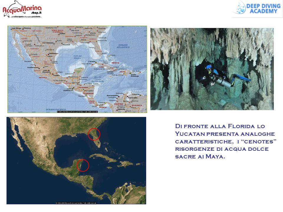 """Di fronte alla Florida lo Yucatan presenta analoghe caratteristiche, i """"cenotes"""" risorgenze di acqua dolce sacre ai Maya."""