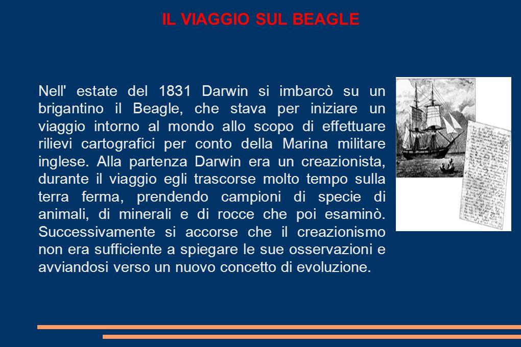 IL VIAGGIO SUL BEAGLE Nell estate del 1831 Darwin si imbarcò su un brigantino il Beagle, che stava per iniziare un viaggio intorno al mondo allo scopo di effettuare rilievi cartografici per conto della Marina militare inglese.
