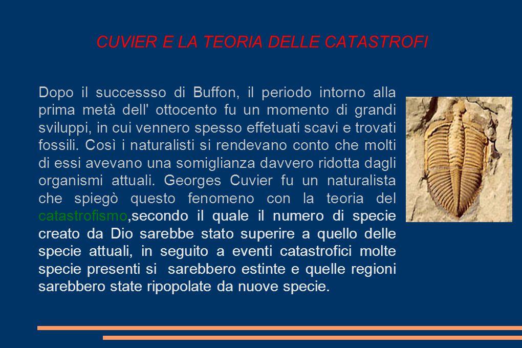 CUVIER E LA TEORIA DELLE CATASTROFI Dopo il successso di Buffon, il periodo intorno alla prima metà dell ottocento fu un momento di grandi sviluppi, in cui vennero spesso effetuati scavi e trovati fossili.