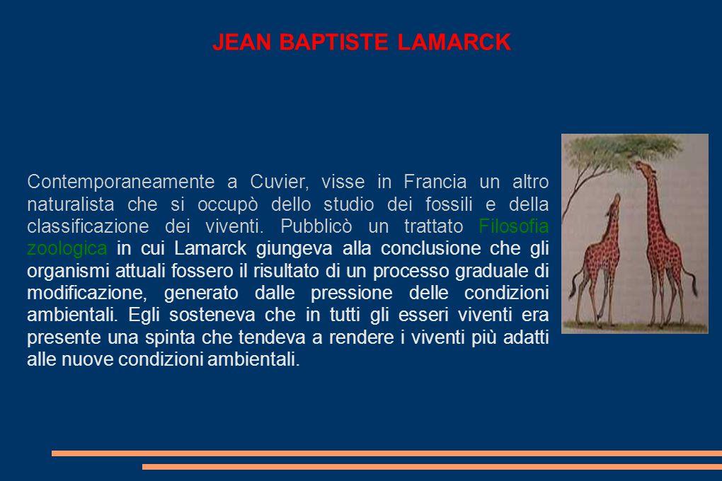 JEAN BAPTISTE LAMARCK Contemporaneamente a Cuvier, visse in Francia un altro naturalista che si occupò dello studio dei fossili e della classificazione dei viventi.