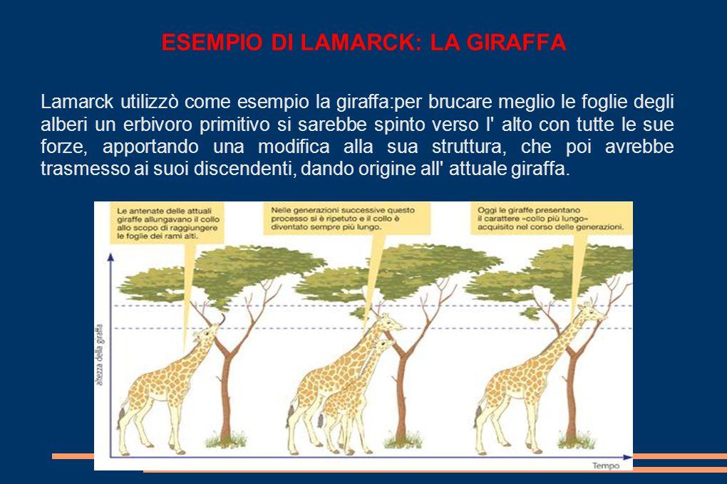 ESEMPIO DI LAMARCK: LA GIRAFFA Lamarck utilizzò come esempio la giraffa:per brucare meglio le foglie degli alberi un erbivoro primitivo si sarebbe spinto verso l alto con tutte le sue forze, apportando una modifica alla sua struttura, che poi avrebbe trasmesso ai suoi discendenti, dando origine all attuale giraffa.