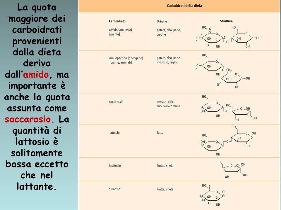 L'amido è un polimero del GLUCOSIO ad alto peso molecolare.