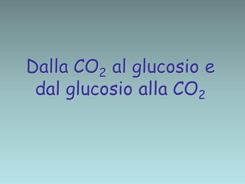 Dalla CO 2 al glucosio e dal glucosio alla CO 2