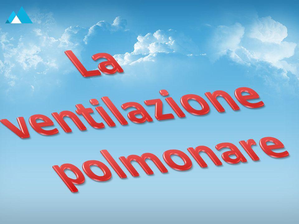 Elaborato realizzato da: Ercolino Giulia Grifa Antonio Pio Mangiacotti Ilaria Mercurio Davidina CLASSE 4°Bb a.s.