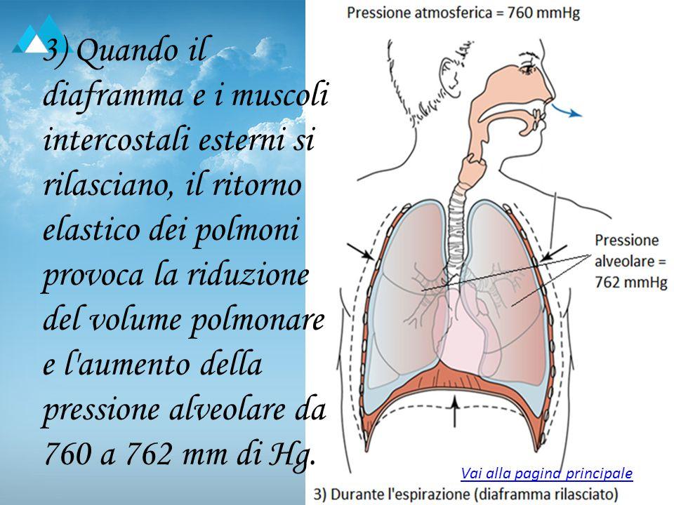 3) Quando il diaframma e i muscoli intercostali esterni si rilasciano, il ritorno elastico dei polmoni provoca la riduzione del volume polmonare e l'a
