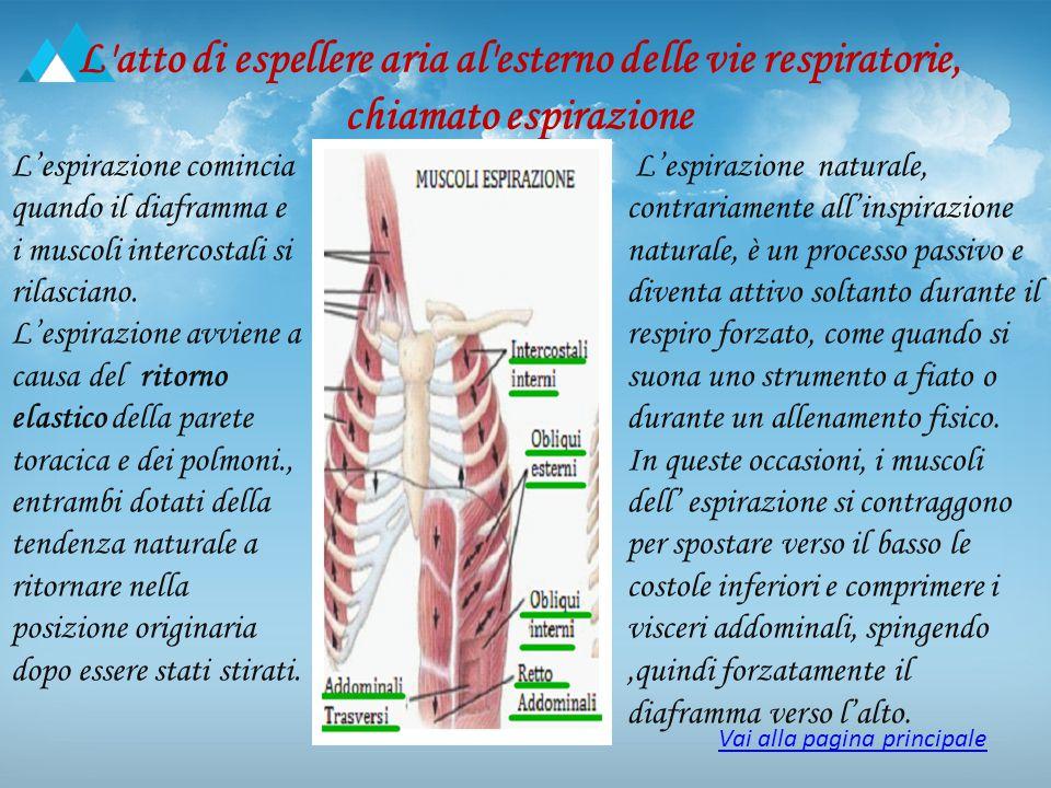 L'atto di espellere aria al'esterno delle vie respiratorie, chiamato espirazione L'espirazione comincia quando il diaframma e i muscoli intercostali s