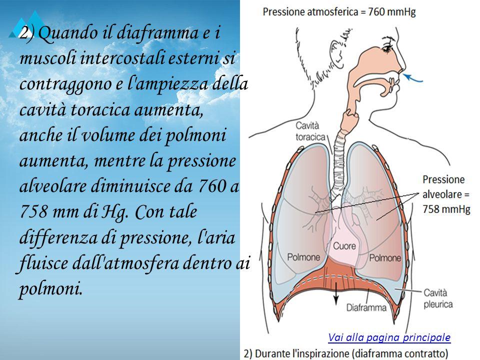 2) Quando il diaframma e i muscoli intercostali esterni si contraggono e l ampiezza della cavità toracica aumenta, anche il volume dei polmoni aumenta, mentre la pressione alveolare diminuisce da 760 a 758 mm di Hg.