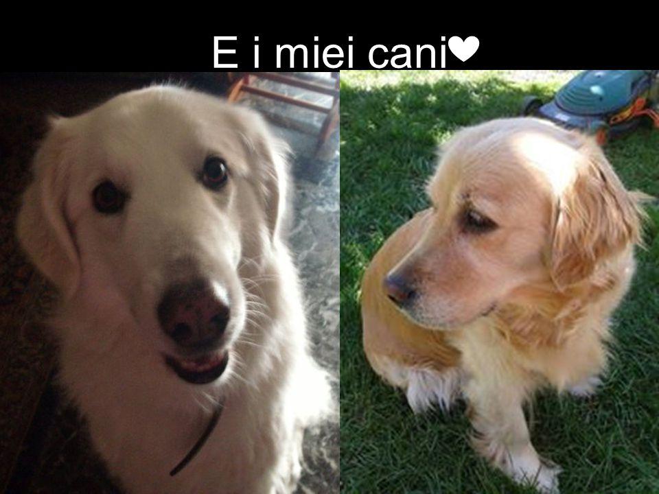 E i miei cani