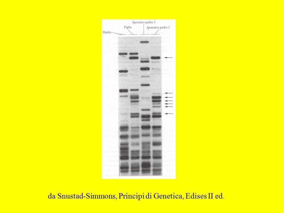 da Snustad-Simmons, Principi di Genetica, Edises II ed.
