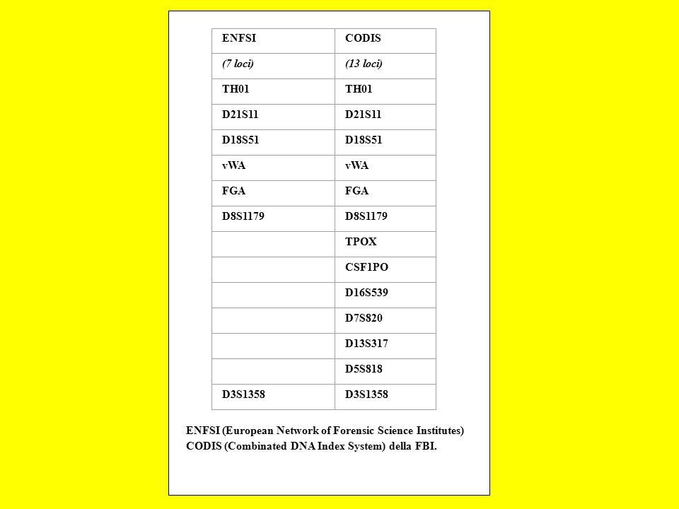 ENFSICODIS (7 loci)(13 loci) TH01 D21S11 D18S51 vWA FGA D8S1179 TPOX CSF1PO D16S539 D7S820 D13S317 D5S818 D3S1358 ENFSI (European Network of Forensic