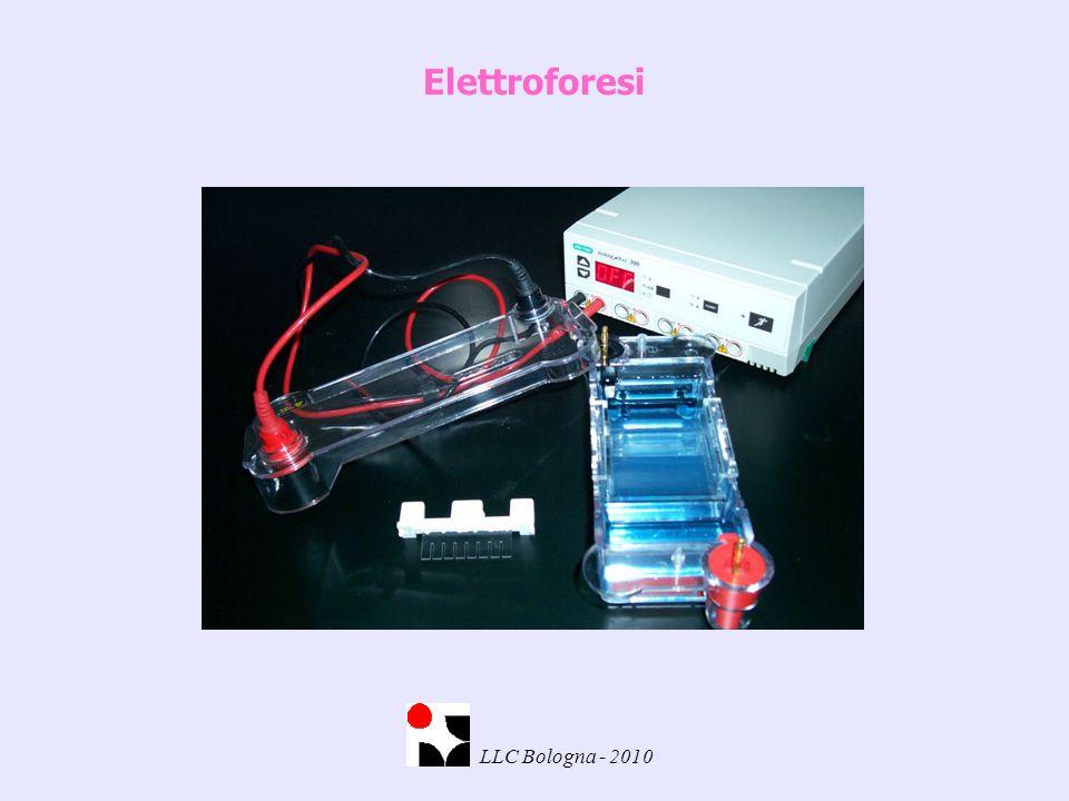 Elettroforesi LLC Bologna - 2010