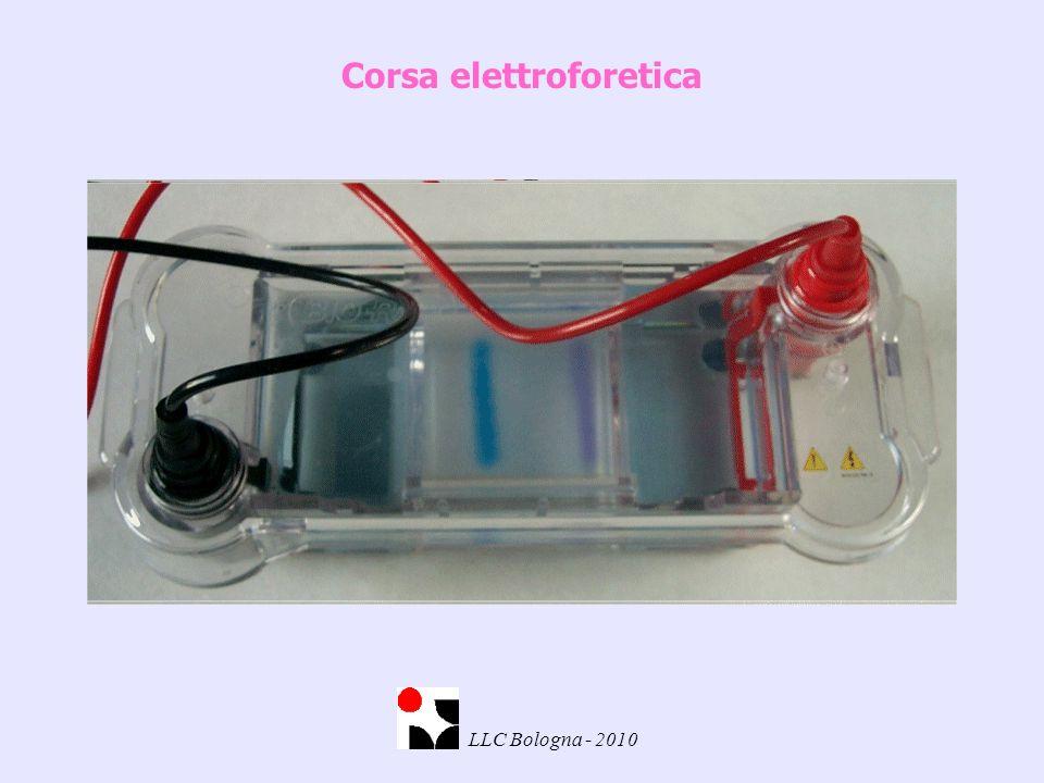 Corsa elettroforetica LLC Bologna - 2010