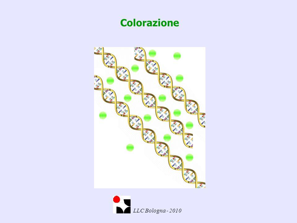 Colorazione LLC Bologna - 2010