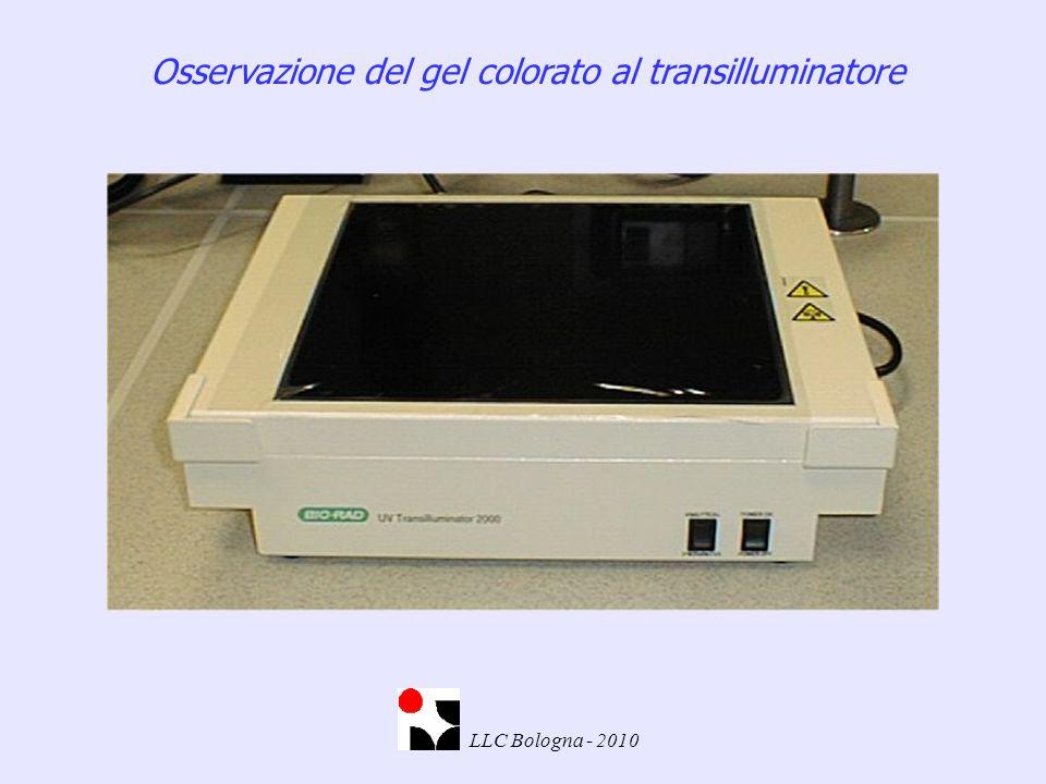 Osservazione del gel colorato al transilluminatore LLC Bologna - 2010