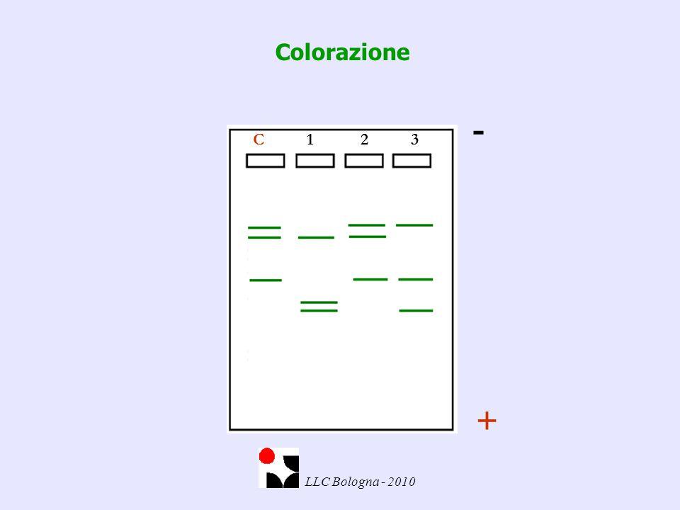 C 1 2 3 - + Colorazione LLC Bologna - 2010