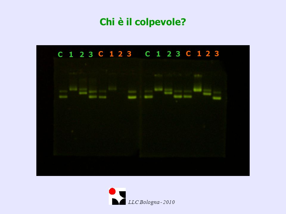 Chi è il colpevole? C 1 2 3 LLC Bologna - 2010