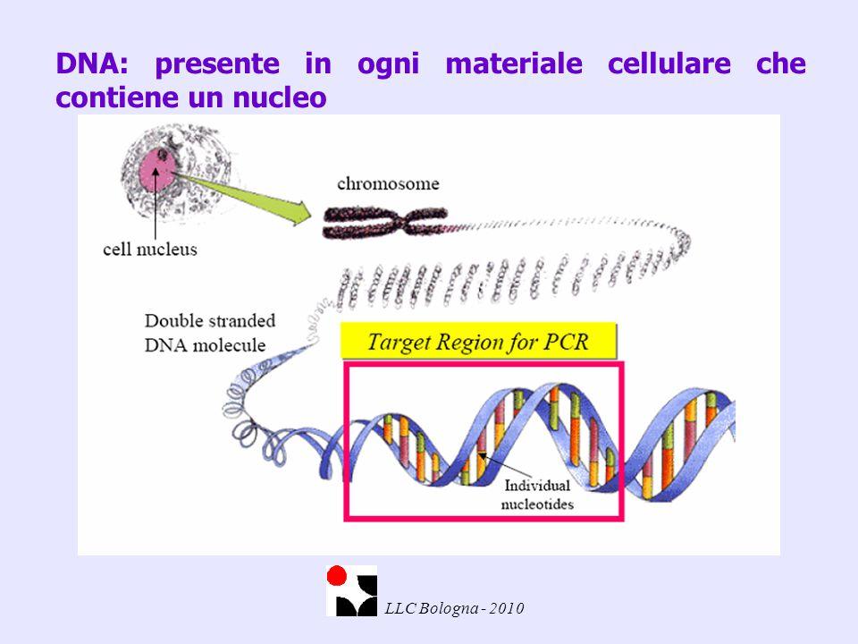 DNA: presente in ogni materiale cellulare che contiene un nucleo LLC Bologna - 2010